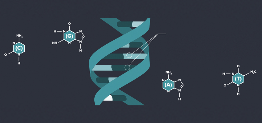 Labeled DNA